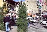 "(an-Nahar, November 20, 2010) لا يمكن المارة وسط السوق التجارية في بعلبك الا التوقف والتمتع ثواني بمشاهدة نبتة حشيشة عملاقة ""تشمخ"" وسط السوق على رغم انتهاء موسم زراعتها اذ تعدى […]"