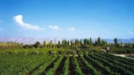 """Con circa sette milioni di bottiglie prodotte all'anno, il vino libanese sta conquistando sempre più spazio nel mercato mondiale: """"Marks & Spencer"""", la nota catena commerciale britannica, ha deciso di […]"""
