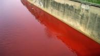 Le acque solitamente grigiastre del fiume di Beirut (al-nahr, per i locali) si sono tinte di rosso sangue dopo che del liquido dello stesso colore ha incominciato a defluirvi dalla […]