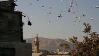 Non rimangono che i piccioni viaggiatori agli abitanti di Homs, epicentro della rivolta in Siria da dieci giorni sotto i colpi dell'artiglieria governativa, per comunicare tra loro e riferire i […]