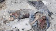 Gli attivisti siriani che da più di un anno sfidano la repressione delle forze del presidente Bashar al Assad hanno accusato oggi il regime di usare i corpi senza vita […]