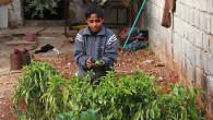 (di Mohammed al Khatieb, per al Monitor. Traduzione dall'inglese di Claudia Avolio). Suleiman, 26 anni, ha trasformato la sua casa − isolata, abbandonata, con i muri crepati e le finestre […]