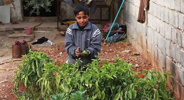 Ahmed nel suo orto (Foto di Mohammed al Khatieb)